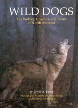 Wild Dogs: The Wolves, Coyotes and Foxes of North America
